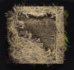 Diana Scherer, Rootbound #3.1, 2018, Soil/seed/photography, fine art print, framed  | 110 x 110 cm; 60 x 60 cm | ed. 5 + 2 AP