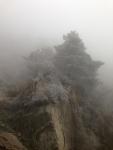 Misty tree, Taishan