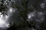 Satijn Panyigay, Melankolia - Levelek/Leaves, 2016, inkjetprint on Canson Photo Rag, black frame with museumglass, 40 x 60 cm / 60 x 90 cm, 5 + 2 AP