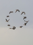 Bird Geometrics