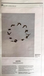 Ornithology – Anne Geene and Arjan de Nooy NRC