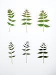 Eeuwig Herbarium #20