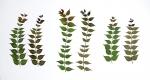 Eeuwig Herbarium #23