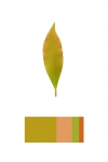 Anne Geene, Colour Analysis #3, 2014, from the series: Colour Analysis, 29,7 x 21 cm, edition 8 + 2 AP