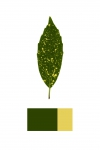 Anne Geene, Colour Analysis #4, 2014, from the series: Colour Analysis, 29,7 x 21 cm, edition 8 + 2 AP