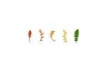 Colour Analysis Achillea millefolium (individual plant)