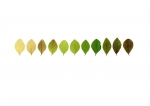 Anne Geene, Colour Analysis ligustrum (individual plant), 2018, From the series: The Museum of the Plant, 29,7 x 42 cm, edition 8 + 2AP