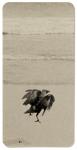 Hans Bol, Untitled #10, negative 2006, printed 2019. Silver gelatin, toning, image size 4,4 x 8,9 cm, framed 30 x 40 cm. Edition 7 + 1 AP