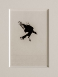 Hans Bol, Untitled 2004-II, negative 2004, print 2021, from the series 'White Crow' | Platinum-palladium print, framed in passepartout w/ museum glass | Image 15 x 10 cm, frame 39,5 x 34 cm | Ed. 3 + 1 AP