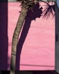 Anastasia Samoylova, Miami Pink,, 2019, from the series FloodZone | Archival Pigment Print or Dye-Sublimation Print on Metal | 100 x 80 cm and 127 x 100 cm | ed. 5/5 (last one)