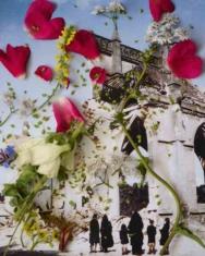 Healing Plants for Hurt Landscapes -Digitalis ambigua i.a. – Normandy, France