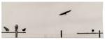Hans Bol, Untitled #66, negative 2004, printed 2018. Silver gelatin, pre-exposure, image size 5,7 x 16,1 cm, framed 30 x 40 cm. Edition 7 + 1 AP