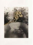 Margaret Lansink, Vulnerable, 2019 | collotype print by Benrido Atelier on handmade Washi paper, reworked by Margaret with 23Kt gold leaf | 56,5 x 41 cm | ed. 2 + 1 AP SOLD OUT