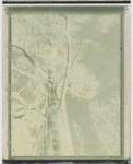 Margaret Lansink, mother nature VII, 2019, from the series body maps | Analogue photography, polaroid | Framed | image size 11.5 x 9 cm, frame size 31 x 25 cm | Unique