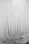 Margaret Lansink, dawn, 2019, from the series body maps | Baryta silver gelatin print | Paper size 13.5 x 9.5, frame size 37 x 27 cm cm | Also available in 26 x 21 cm (paper size), 40 x 50 (frame size) or 41 x 31 cm (paper size), 50 x 60 cm (frame size) | ed. 7 + 2 AP