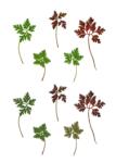 Eeuwig Herbarium #31