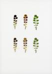 Eeuwig Herbarium #34
