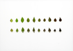 Eeuwig Herbarium #35