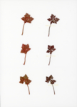 Eeuwig Herbarium #39